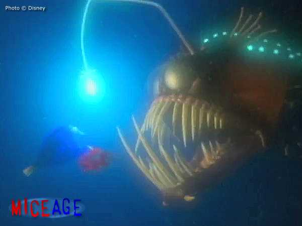 Anglerfish o images frompo for Nemo light fish