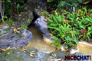A flowing stream near the base of the Treehouse formerly occupied by the Swiss Family Robinson.