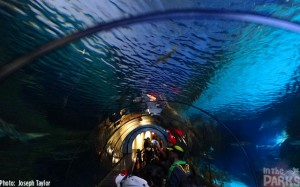 And then you get to the BEST part of the attraction – and arguably the most famous: the underwater view.