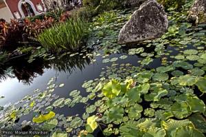 China Pond