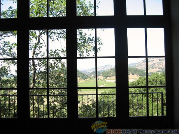 The view from the windows inside the winery.