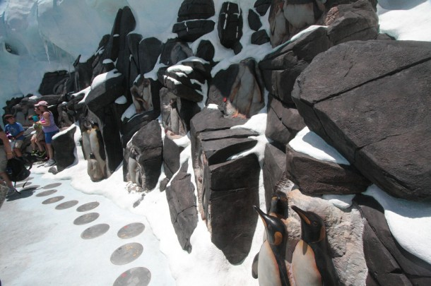 Penguin types are displayed in the rocks, and explained on plaques below.
