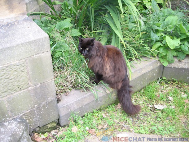 The cat in the graveyard