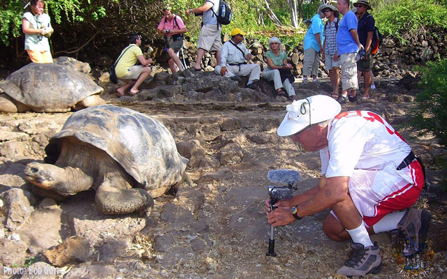 Bob Gurr making his video close-up with a giant tortoise