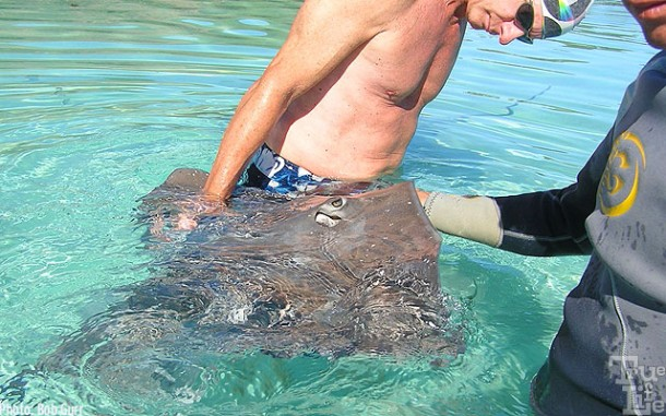 Sting rays are extremely friendly and love to be caressed