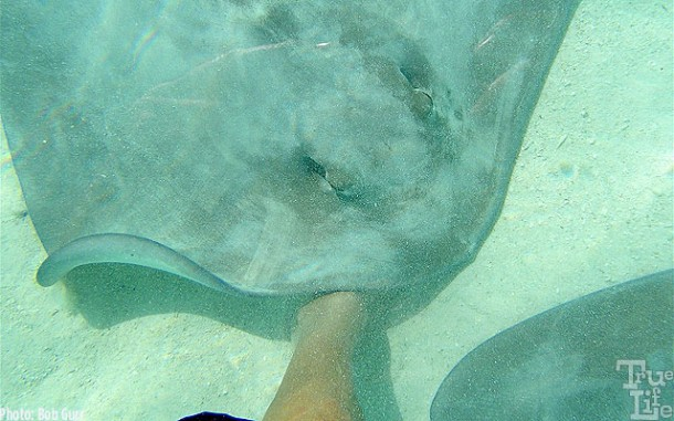 If you don't pet the sting rays, they will pet you!