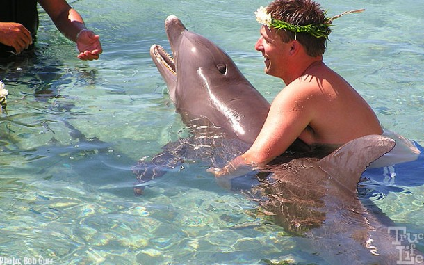 Dolphins seem eager to meet new guests