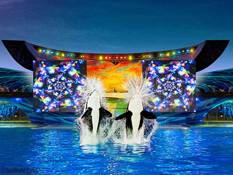 Shamu-Celebration-Light-Up-The-Night