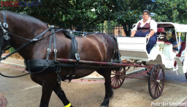 Although we did have the time for the carriage tour, it's something we will do next time.