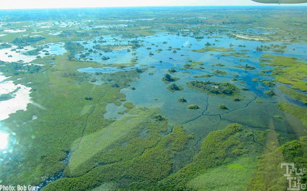 The Botswana Okavango Delta wetlands as seen from the air