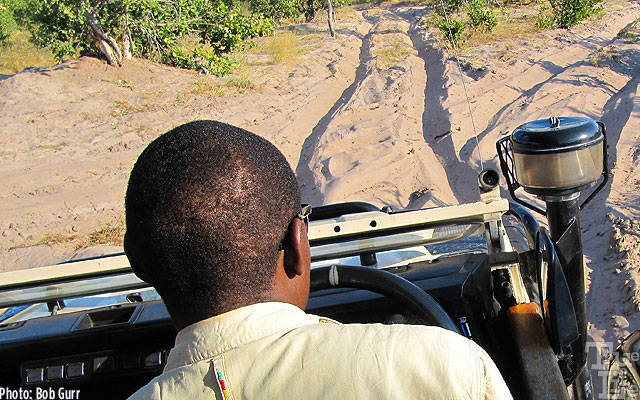 Many of the trails are deep sand which never stop the Land Rovers