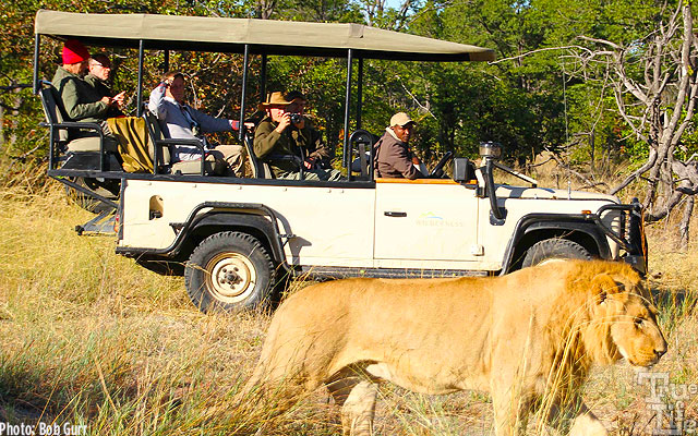 The raised Land Rover seating gives everyone a clear wildlife view