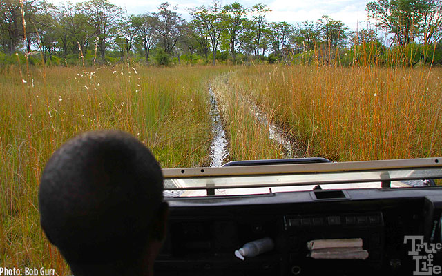 Land Rovers pass thru deep water swamps with ease