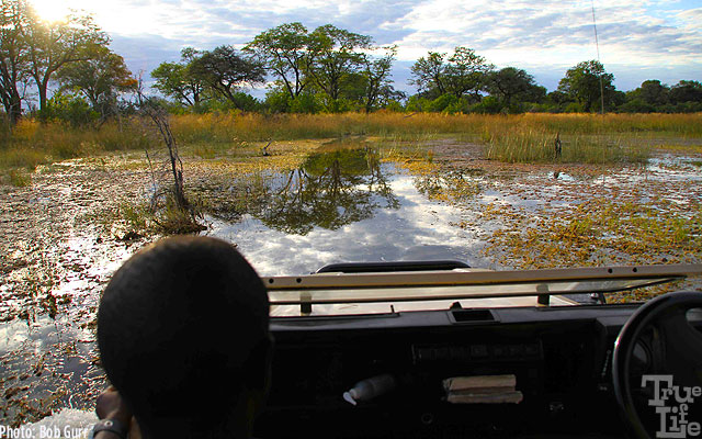 Where no trails exist, Land Rovers simply plow right thru the swamps