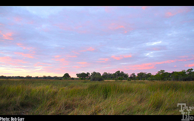 Sunset skies in the open savannah are so soft and peaceful