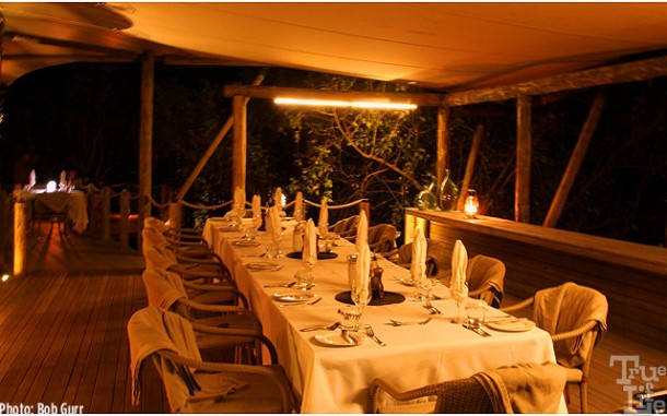 Hard to believe this is open-air dining surrounded by night wildlife
