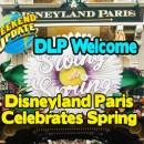 DLP-Spring