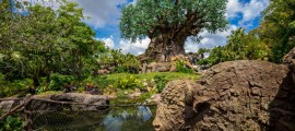 The Tree of Life should have a refurb coming up to install some enhancements for the park's nighttime offerings.