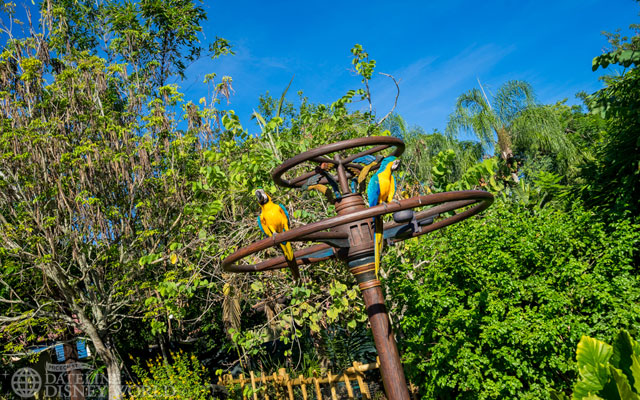 Macaws up front in the morning!
