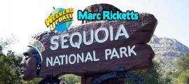 RickettsSequoia