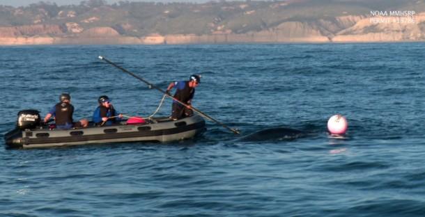 Crew-Whale-780x400