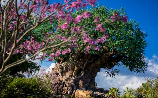 Beautiful trees in bloom around the Tree of Life.