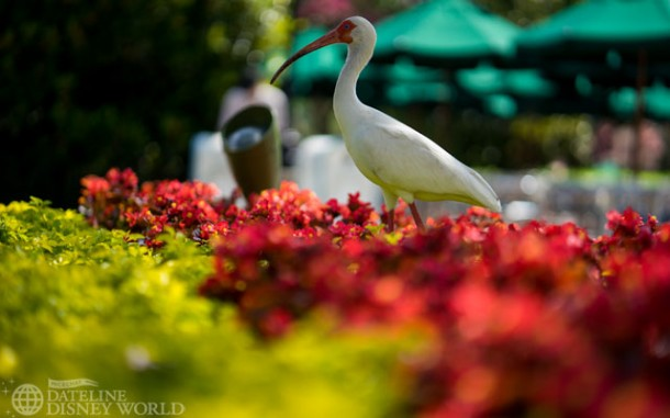 Birds of Epcot.