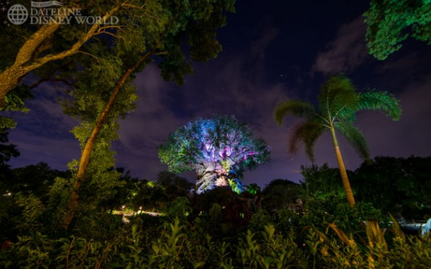 This is just a glimpse at how the Tree of Life looks at night.