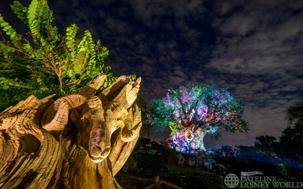 The Tree of Life has multiple different lighting packages throughout the night.