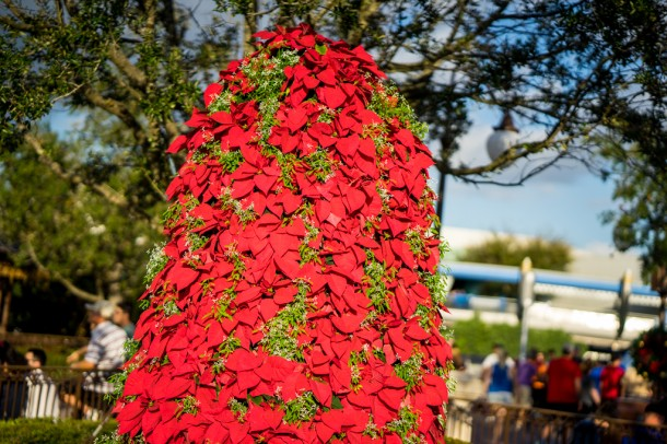 The large poinsettia trees are in the Hub again.