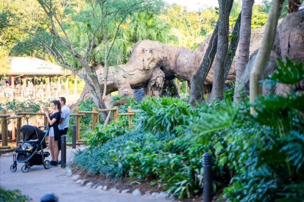 The pathway behind the Tree of Life is open once again, and is a great alternative to the pathway between Africa and Asia.