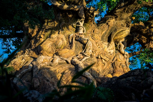 It offers some breathtaking views of the Tree of Life.