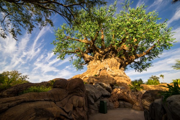 After four years, the trails under the Tree of Life opened to close out 2016.