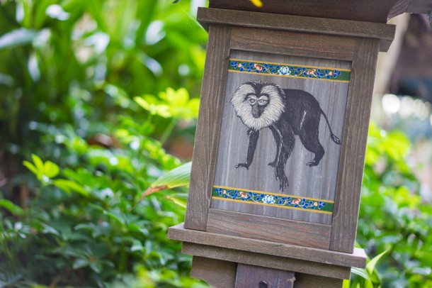 There are some new lion-tailed macaque on the Maharajah Jungle Trek.